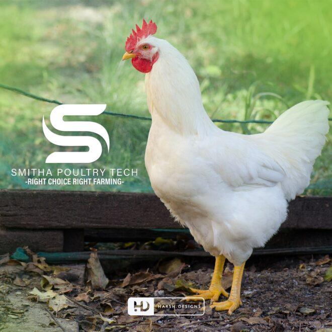 Smitha Poultry Tech - Poultry Logo Design - Letter S and U Logo Design - Monogram Logo Design - Alphabetical Logo Design - Corporate Logo Design - - Graphic Design Service in Hyderabad - Logo Design Service in Hyderabad